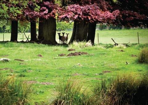The Sherwood Hideaway Lodges