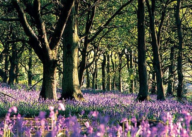 Old Spring Wood