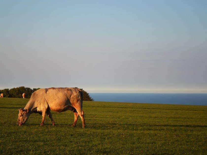 Open coastal farmland | The Yorkshireman, Ravenscar, near Robin Hood's Bay