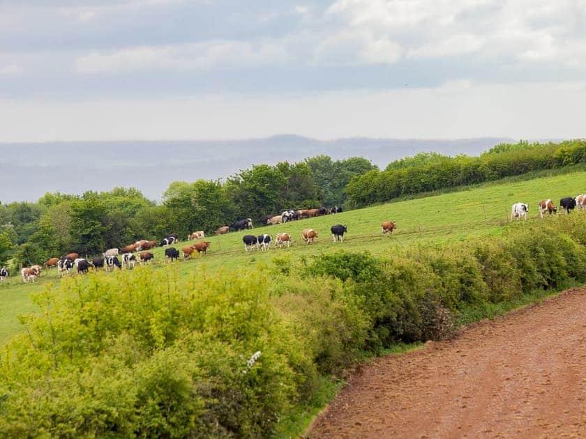 Surrounding area   Poorman's Cot - Highdown Farm, Bradninch