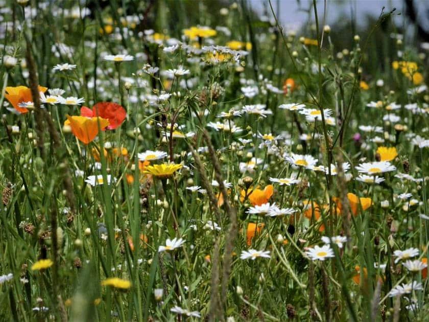 Wonderful wild flower meadow | Lower Millcombe Barns, Linkinhorne, near Callington