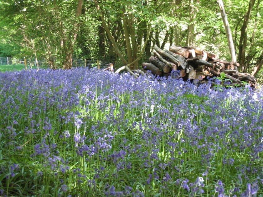 Local bluebell wood | Sellars Brook, Burwash, near Etchingham