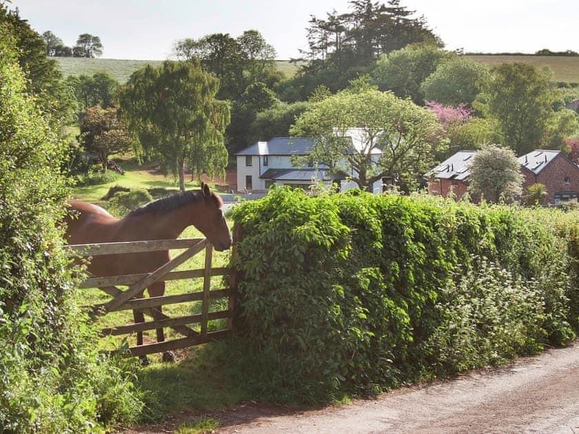 Surrounding area | Oak Cottage - Blagdon House Country Cottages, Blagdon, near Paignton