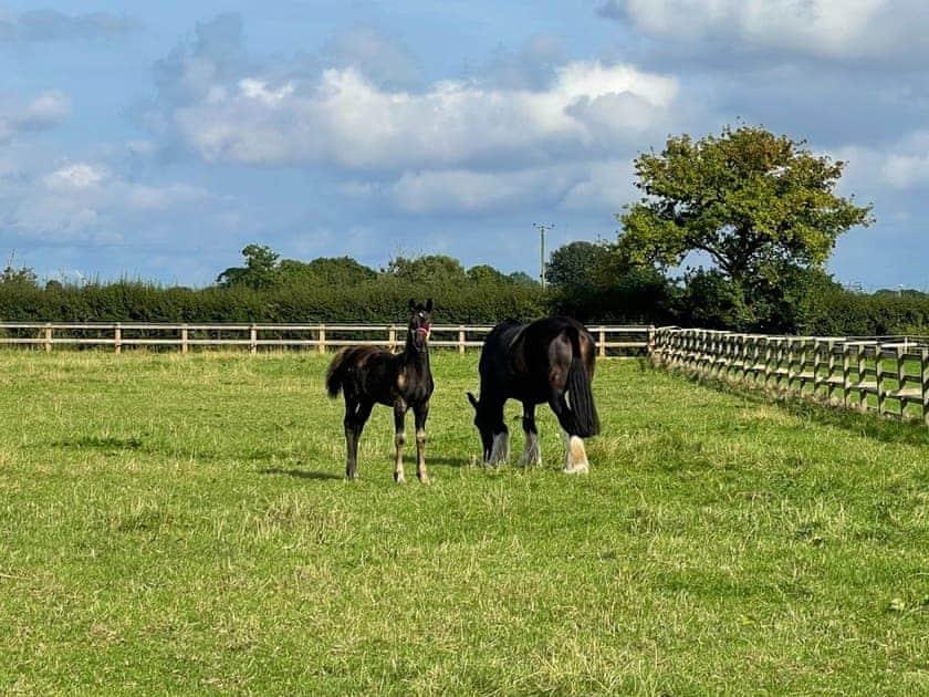 Around the farm complex | Mulberry Hayloft, Little Barugh, near Pickering