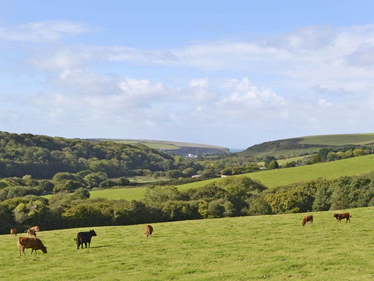 Higher Lanvean Farm - Merlin View