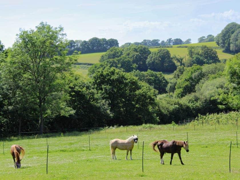 Surrounding countryside | The Cottage, Piltdown, near Uckfield