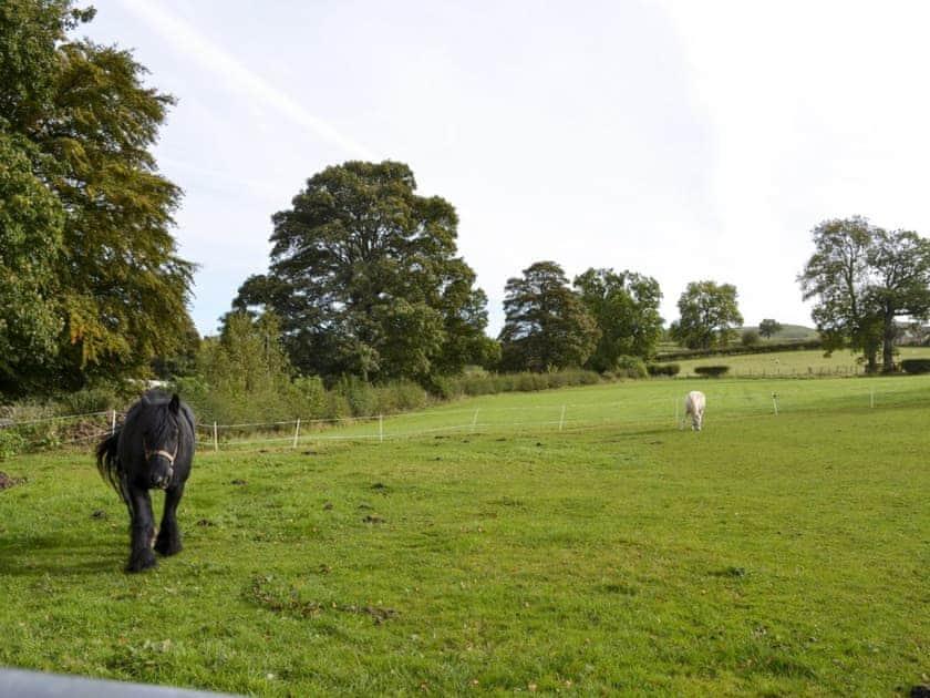Beautiful countryside   Bridge End Farm, Frosterley
