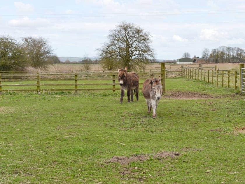 Friendly donkeys in a nearby paddock   Swallows Barn, Low Marishes, near Pickering