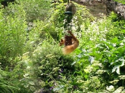 Garden | Fern Cottage, Great Strickland, nr. Ullswater
