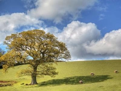 Surrounding area | Ashcombe - Madeleine, Ashcombe, nr. Dawlish