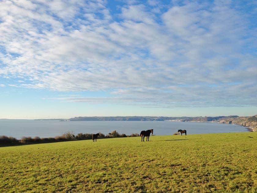 Surrounding area | Coastal Wood Holidays - The Nook, Marros, nr. Amroth