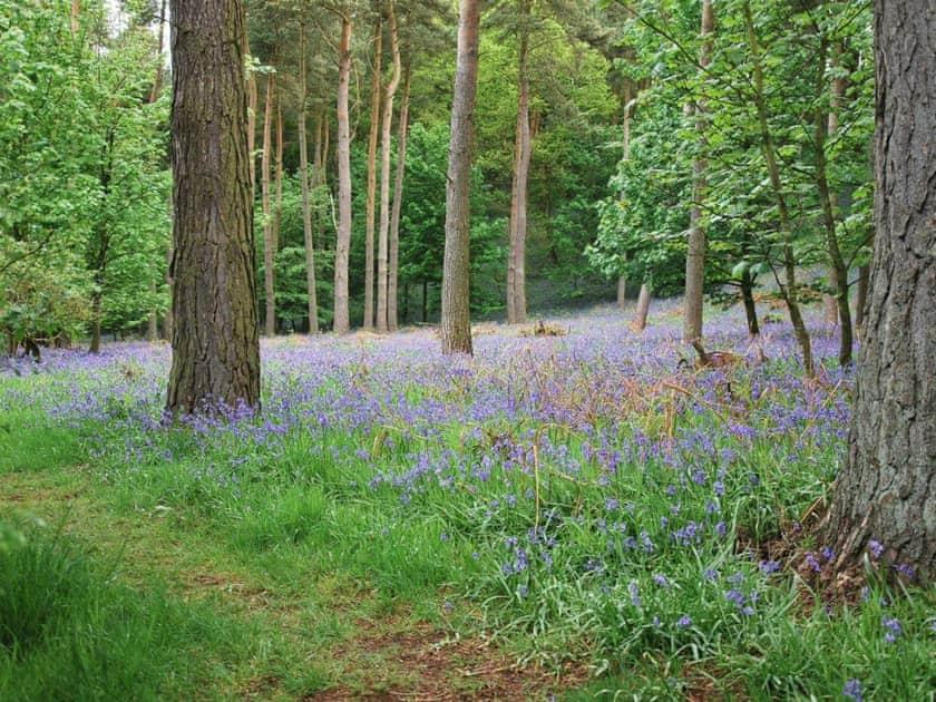 Flakebridge Wood, Brampton   High Moor Cottage, Brampton, nr Appleby