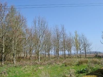 View | Arbigland Farms - Little Dunbar Cottage, Arbigland Estate, Kirkbean nr. Dalbeattie