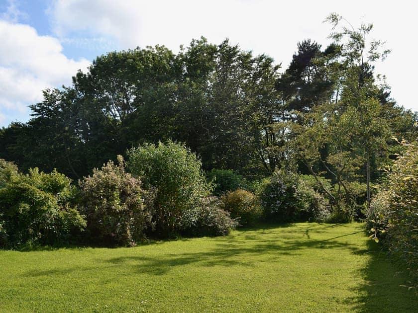 Garden   Allium, Tynely near Beadnell