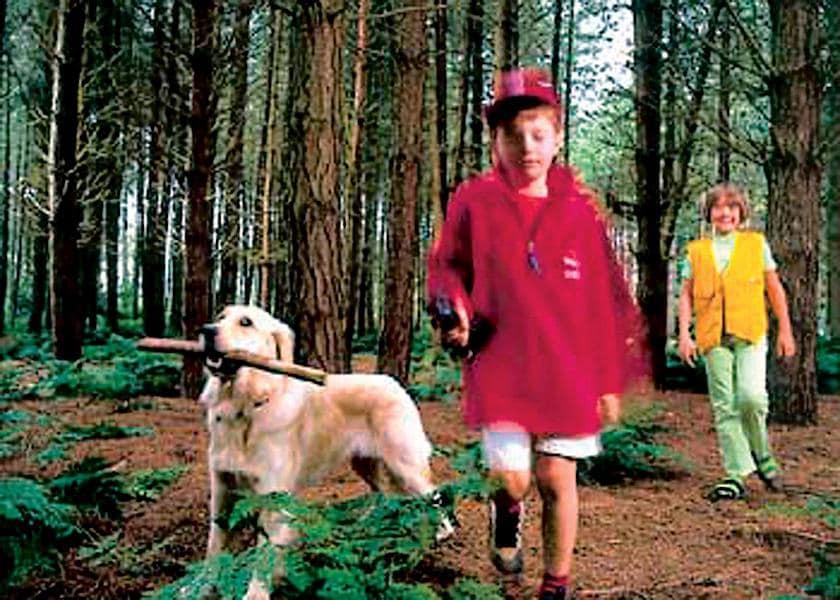 Enjoy woodland walks