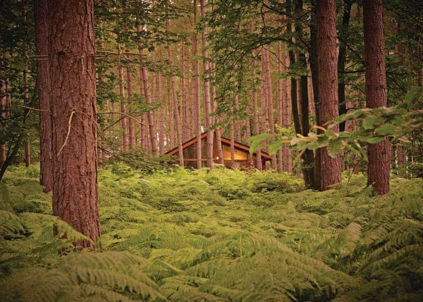 Sherwood Forest Lodges